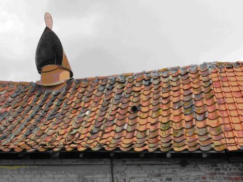 Poperinge Kleine Dasdreef 1 Gek op dak van ast