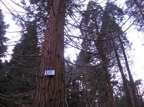 Koekelare Bovekerkestraat zonder nummer Bosarboretum