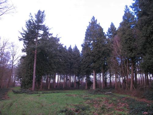 Koekelare Bosarboretum