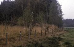Finaalpaleolithisch en mesolithisch sitecomplex De  Liereman