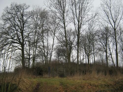 Tumulus op het Tomveld