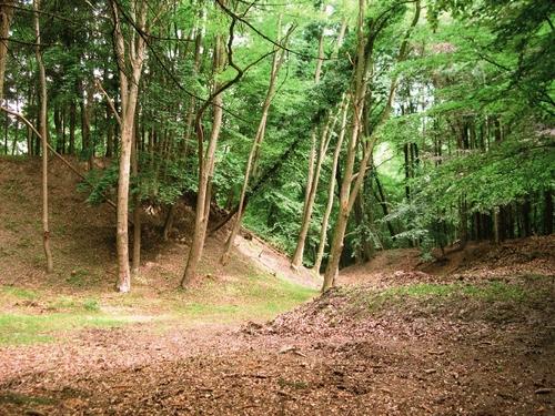 Heuveltjes en kuilen, deel van de oude steengroeve, in het beboste noordwestelijke gedeelte van het domein van de Putberg