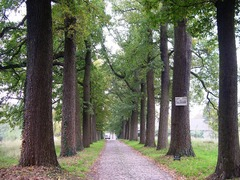 Park en boomgaard van het domein Morette