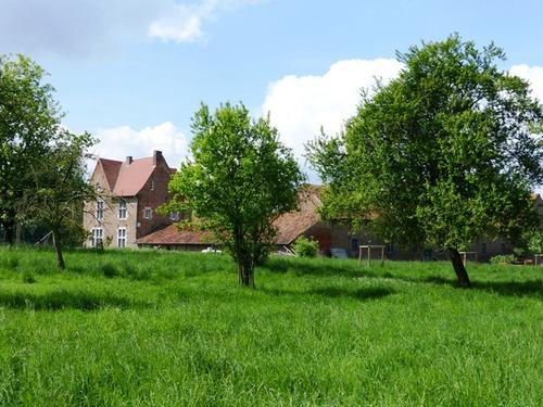 Borgloon Manshoven 1 Hoogstamboomgaard