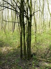 Wegedoorn in het Etbos