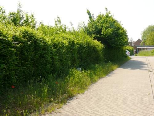 Bornem Hingene Schuttershofweg Afsluitingshagen (2)