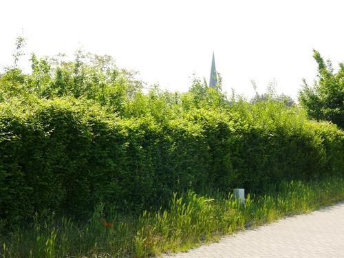 Bornem Hingene Schuttershofweg Afsluitingshagen (3)