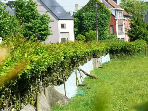 Bornem Hingene Schuttershofweg Afsluitingshagen (6)