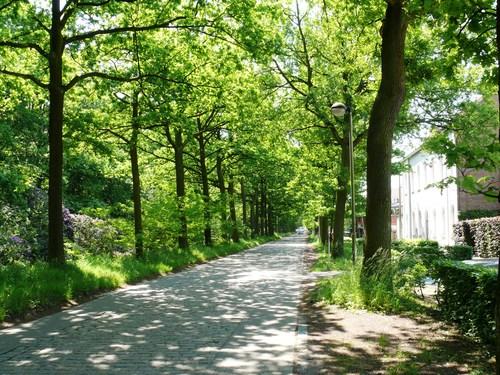 Bornem Edmond Vleminckxstraat Lijnbeplanting