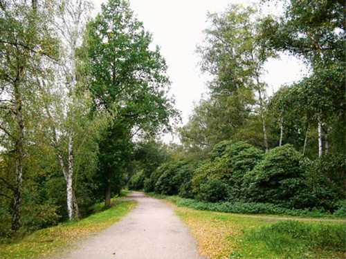 Het grote rododendronmassief in de noordwestelijke punt van het domein, in 1942 aangeplant op aanwijzing van 'rijkstuinbouwconsulent' Verbelen