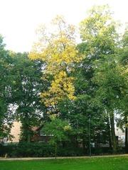 Hortus Thenensis