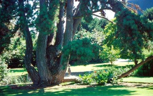 Klooster der witzusters met park