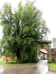 Welkomstboom bij Kasteelhoeve