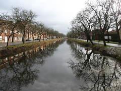 Bomenrijen van opgaande okkernoten langs kanaal