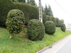 Topiary van buxus bij de pastorietuin