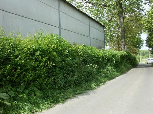 Zwalm St Denijs Boekel Heufkensstraat 22 24 Neerkouter Gemengde veekering bij hoogstamboomgaard