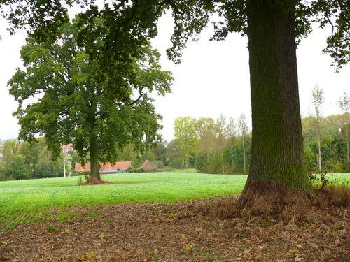 Maarkedal Hollebeek Opgaande eik (2)