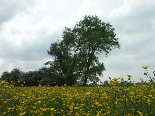 Aalst Nieuwerkerken Achtermaal Hoekbomen (1)