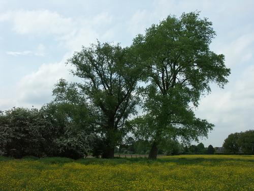 Aalst Nieuwerkerken Achtermaal Hoekbomen (5)