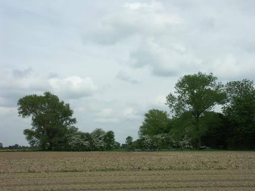 Aalst Nieuwerkerken Maleveld Hoekbomen (2)