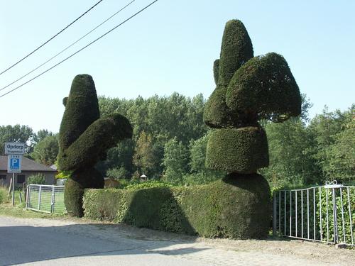 Afsluitingshaag met topiary