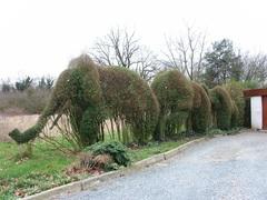 Geschoren olifanten topiary van haagliguster