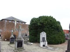 Buxus sempervirens op kerkhof Sint-Servatiuskerk