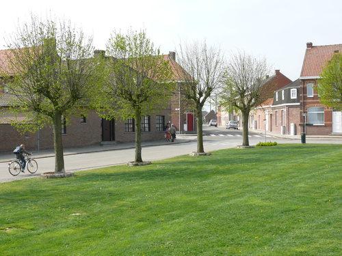 Heuvelland (Wijtschate) Sint-Medardusplein Gekandelaarde pleinbeplanting van linde (2)