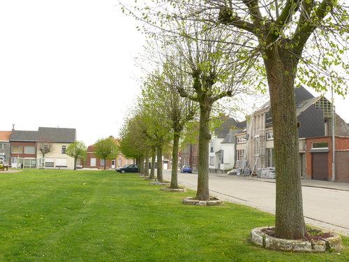 Heuvelland (Wijtschate) Sint-Medardusplein Gekandelaarde pleinbeplanting van linde (3)