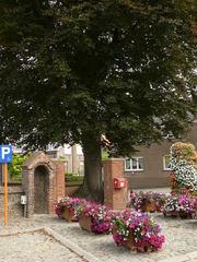 Kluisbergen Zulzeke Zulzekestraat Vredesboom (1) (https://id.erfgoed.net/afbeeldingen/188626)