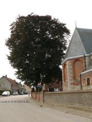 Kluisbergen Zulzeke Zulzekestraat Vredesboom (5) (https://id.erfgoed.net/afbeeldingen/188630)
