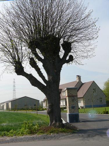 Twee gekandelaarde linden als welkomstbomen