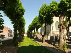 Dubbele bomenrij van gekandelaarde linden op kerkhof Alveringem