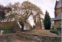 Twee treuressen als kerkhofbomen