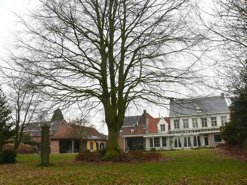 Sint-Maria-Horebeke Dorpsstraat 39 Breune beuk (2)