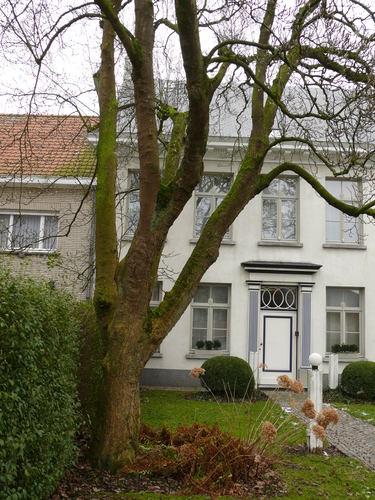 Horebeke_Sint-Maria-Horebeke_Dorpsstraat 39_Magnolia