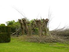 Lindenprieel in pastorietuin Sint-Denijsparochie
