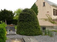 Geschoren hulststruik kerkhof parochiekerk Sint-Denijs