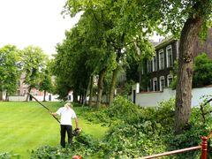 Bomenrij van gekandelaarde linden Klein Begijnhof Onze-Lieve-Vrouw ter Hoye
