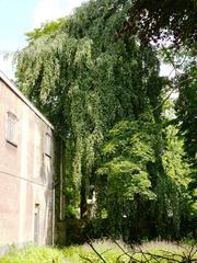 Treurbeuk bij Klein Begijnhof Onze-Lieve-Vrouw-Ter-Hoye