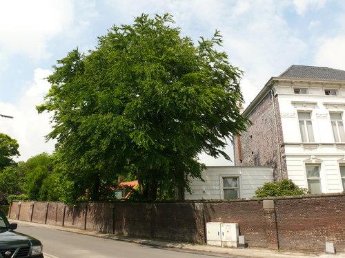 Nevele Cyriel Buyssestraat 44 Katsoeraboom (4)