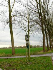 Kapelboom Bevende Hazelaar