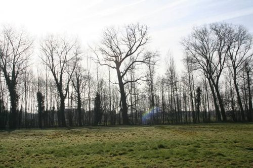 Nevele Hansbeke Warandestraat 9 Grauwe abeel (2)