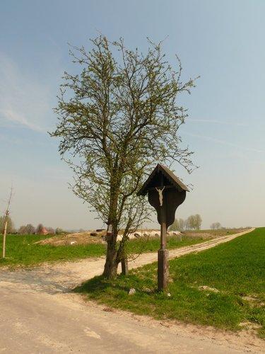 Zottegem Sint-Goriks-Oudenhove Kortendries Meidoorn bij veldkruis (2)