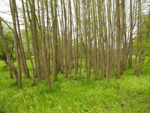 Voeren Kasteelstraat hakhout en opgaande bomen bij spaarvijver watermolen van Sinnich