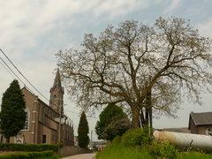 Notenboom op boerenerf