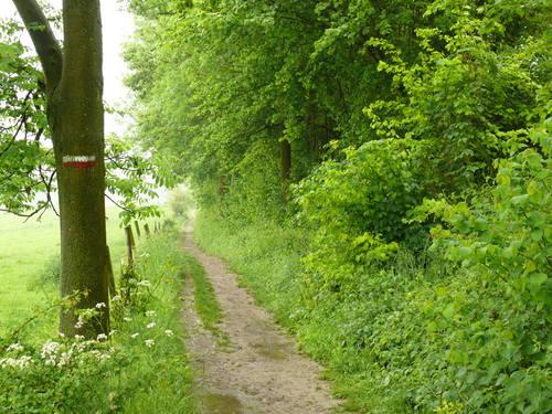 Voeren Sint-Martens-Voeren Krindaal houtkant op talud langs pad