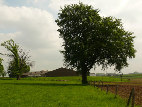 Sint-Martens-Voeren Schilberg beuk en eik als erfbeplanting