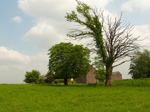 Sint-Martens-Voeren Schilberg opgaande eik en knothaagbeuk als erfbeplanting