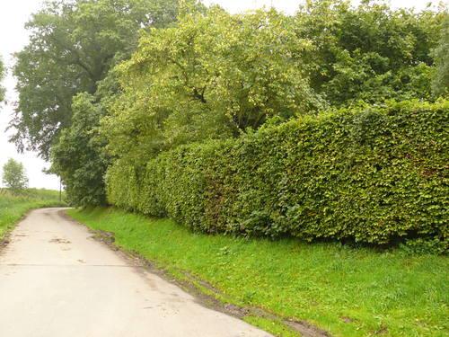 Maarkdal Bossenaarstraat Haagbeuken afsluitingshaag bij Hof te Cattebeke (3)
